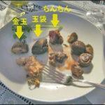 PHOTO of Chef Mao Sugiyama genitals on dinner plate